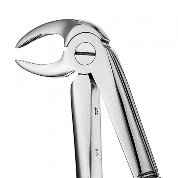 Zahnzange glänzend ohne Teflonschiene #33 europ., UK Wurzel